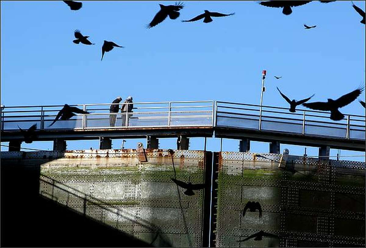 People look out towards Salmon Bay from a walkway at the Hiram M. Chittenden Locks. The Hiram M. Chittenden Locks are closed to all maritime traffic for two weeks to allow for annual maintenance.