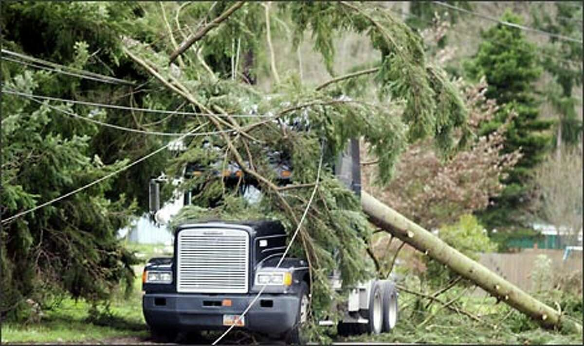 A semi idles under a large pine tree and powerlines that fell on the truck near Maple Valley on Renton Maple Valley Road on Thursday during a windstorm with gusts near hurricane strength.