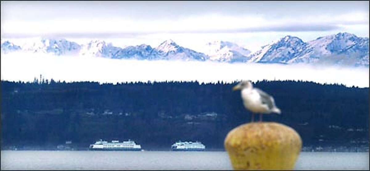 Peaks of the Olympic Mountains appear briefly between layers of low fog and high clouds during a sun break Sunday. A gull enjoys the relatively calm day on the pier at Naval Station Everett.