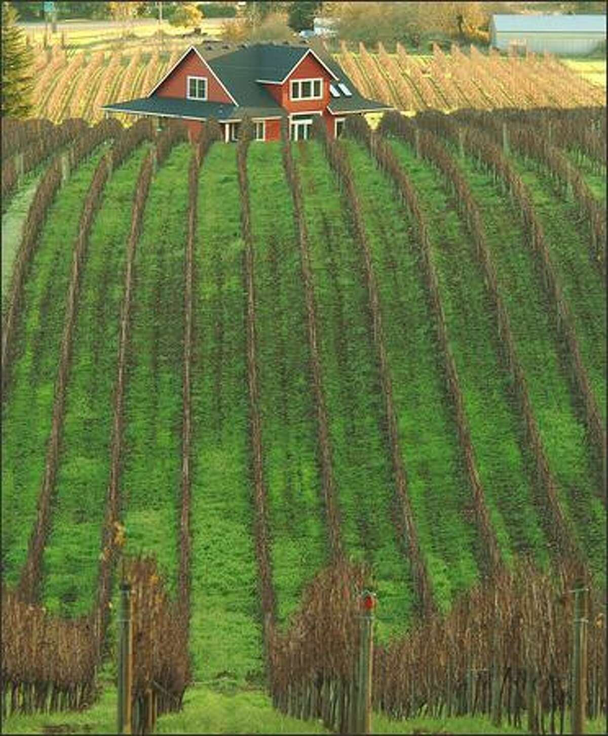 McMinnville is at the southwest corner of the prolific Yamhill County wine-growing region. The Sokol Blosser Winery vineyard is pictured.