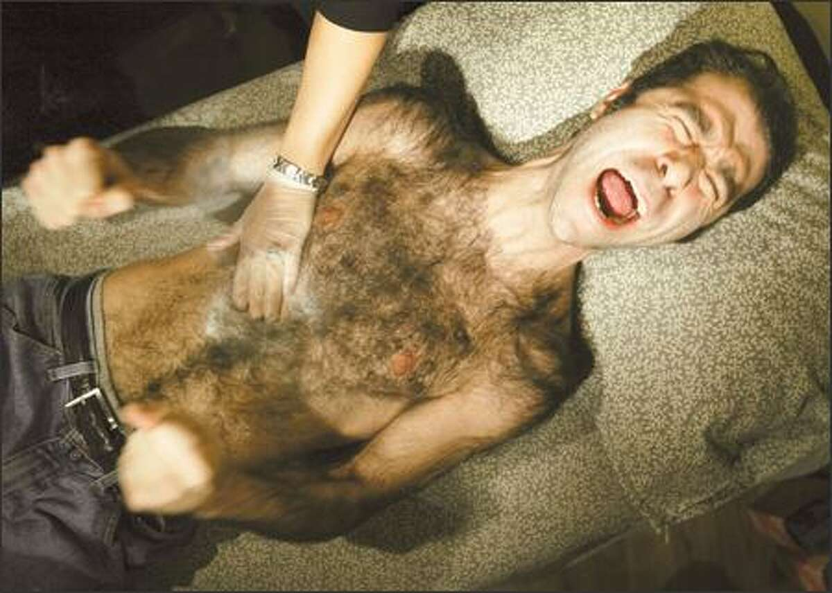 Barzin Akhavan roars as chest hair is ripped out during a hairy-man contest. Screaming was encouraged at the contest, staged to promote the DVD release of
