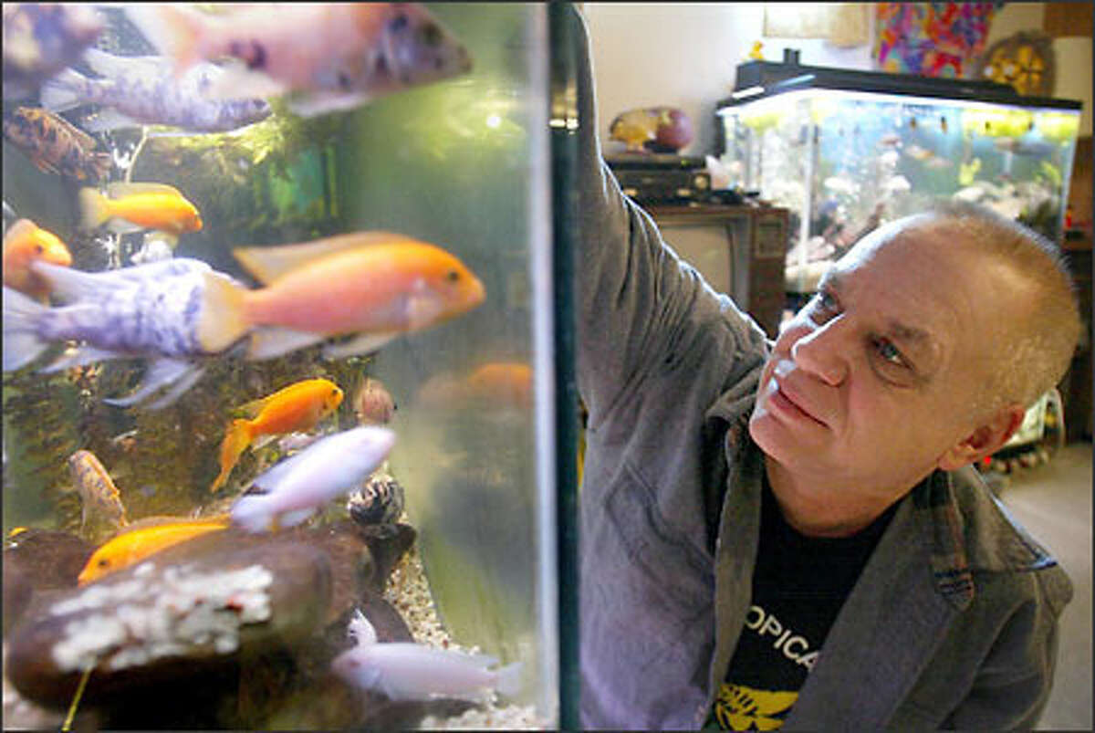 Gary Moody, an electrician constructor at Ross Powerhouse, feeds the fish in one of his 24 tropical fish tanks at his home in Diablo as he prepares to