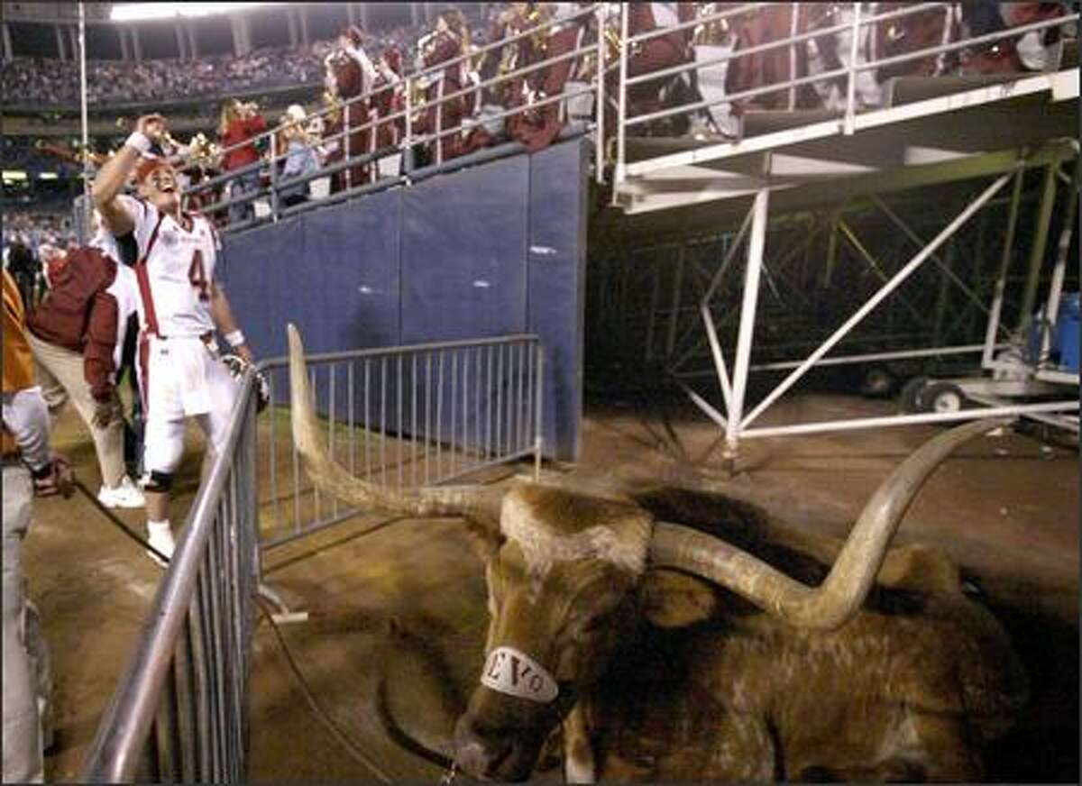 WSU quarterback Matt Kegel celebrates following the Cougars' win, much to the chagrin of Texas mascot Bevo.