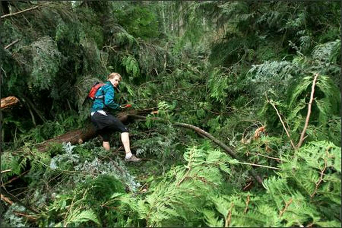 Scott McCoubrey, co-owner of the Seattle Running Company, removes branches from trees felled by the recent windstorm in Bridle Trails State Park in Bellevue. The company is holding its annual Bridle Trails Winter Trail Running Festival on Jan. 13.