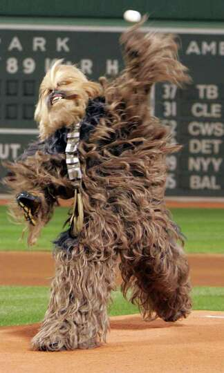 Prior to a game between the Boston Red Sox and Toronto Blue Jays an actor playing Chewbacca throw