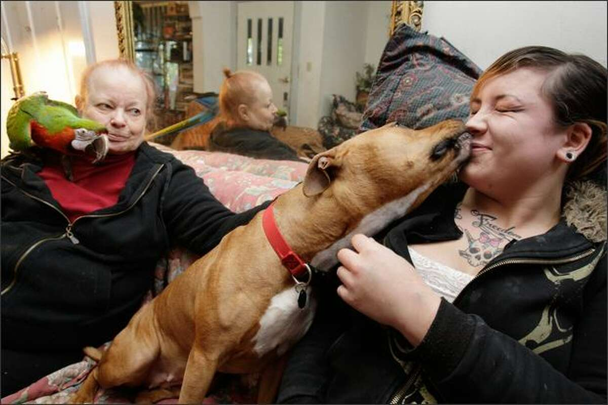 Isis isn't shy about showing Annabel Swanberg, 17, affection. Grandmother Carol Swanberg says the pit bull also gets along with the bird and cat in their Queen Anne home.