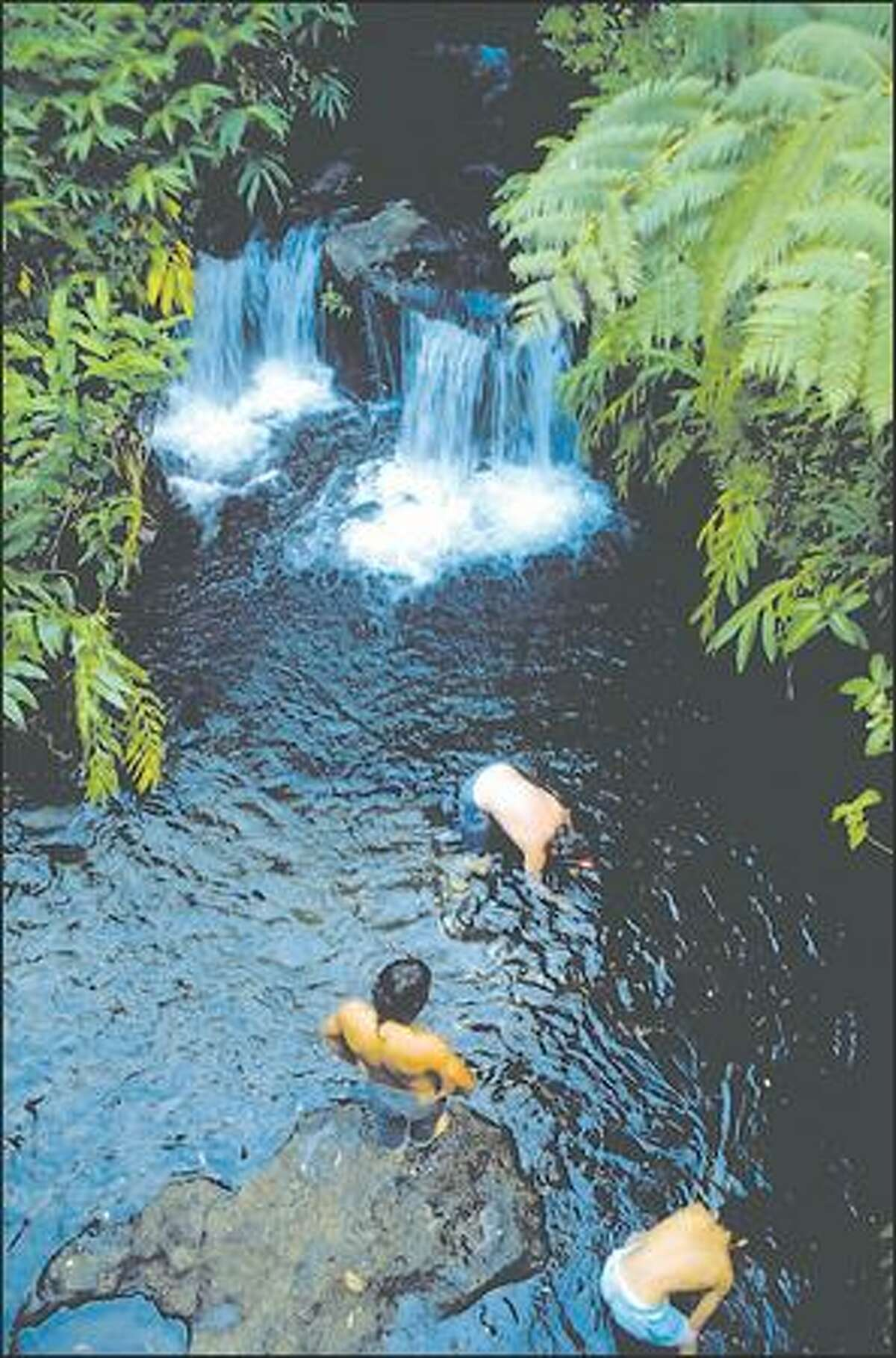 Local kids can't resist the lure of coins tossed in a pool at one of the falls in Akaka Falls State Park on the Big Island.