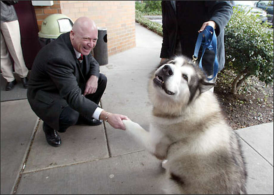 All in a good paws . . . Ricky the malamute is all smiles as he shakes the hand of Bartell Drug Co.'s Michael McMurray at the Seattle Animal Shelter. Photo: Gilbert W. Arias, Seattle Post-Intelligencer / Seattle Post-Intelligencer