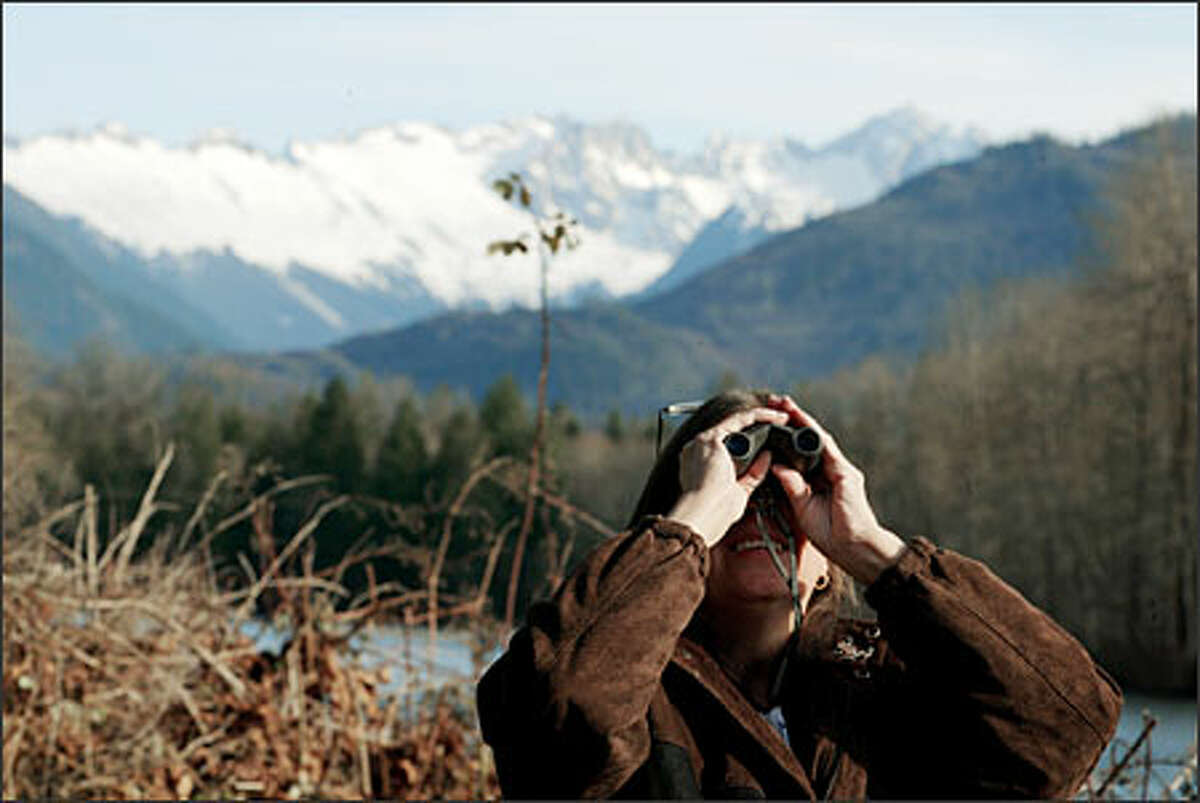 Janeen Penzotti of Mount Vernon looks at a bald eagle from a vantage point on the Skagit River at Milepost 100 on Route 20. In the background are the North Cascades.