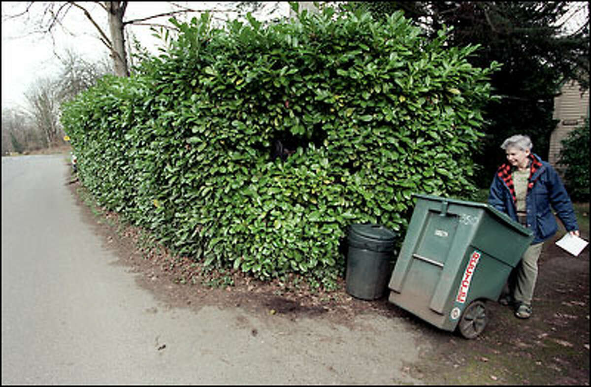 Cameron Justam has been ordered to remove the 10-foot-high laurel hedge in front of her Beacon Hill home because the city is looking to reclaim the property and make improvements on Cheasty Boulevard. The road was earmarked for a parks project in 1910 but nothing had been done with it until recently.