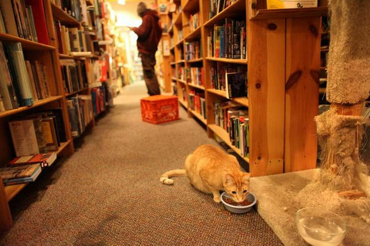 A cat wanders the aisles inside Twice Sold Tales on University Avenue.
