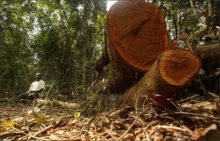 An unidentified man sits next to felled trees at the Afi mountain forest reserve near Ikom, Nigeria. From Brazil to central Africa to once-lush islands in Asia's archipelagos, human encroachment is shrinking the world's rain forests. (AP PhotoGeorge Osodi) Photo: Associated Press / Associated Press