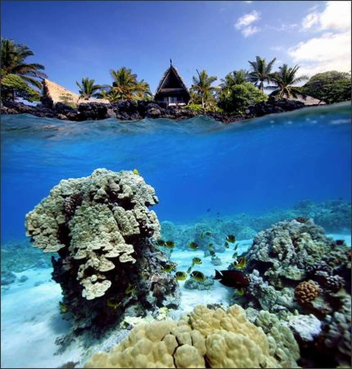 The shallow waters of Kahuwai Bay, full of beautiful fish, offer excellent snorkeling. Kona Village