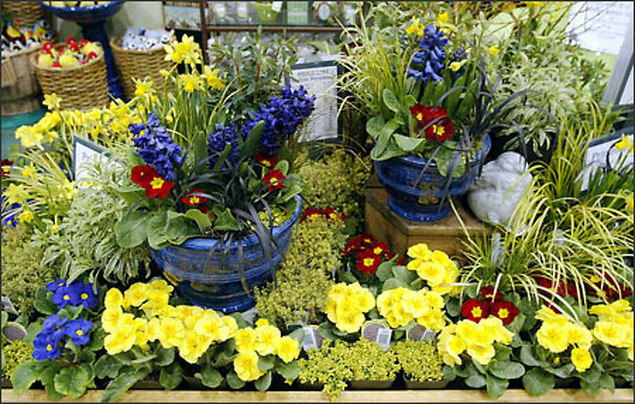 Molbak's is selling whimsical glazed pots (with seed packet) for $17.99. Also at the Molbak's booth, Great Plant Picks posters are on sale for $2. Photo: Gilbert W. Arias, Seattle Post-Intelligencer / Seattle Post-Intelligencer