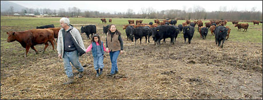 George, Nichole, 8, and Eiko Vojkovich walk through one of several pastures grazed by their Angus cows. Raising organic-certified beef is as much about growing organic grasses as it is the cattle, says George. Photo: Grant M. Haller, Seattle Post-Intelligencer / Seattle Post-Intelligencer