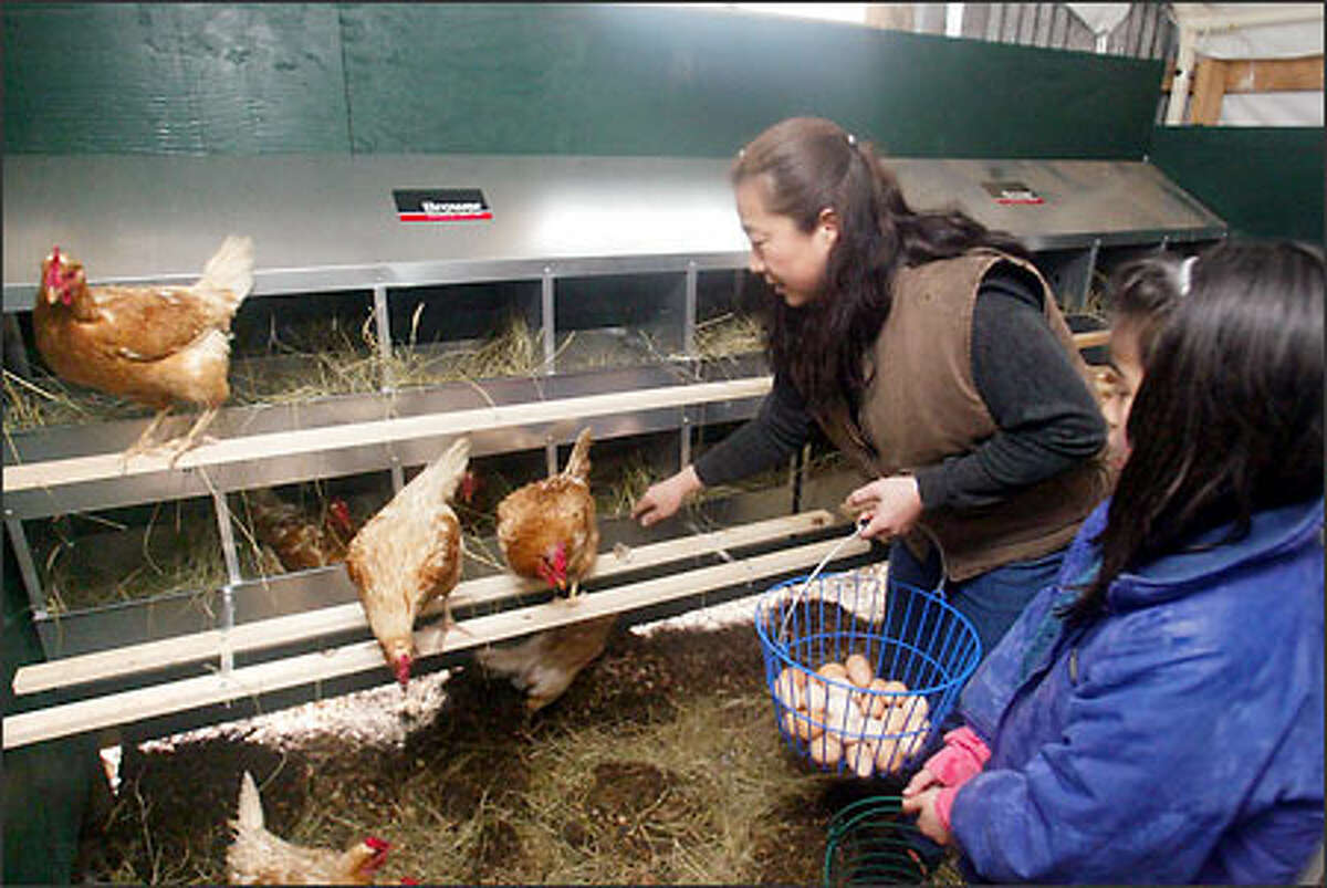 Eiko Vojkovich collects the eggs from the farm's healthy, and hopefully happy, organically fed hens.