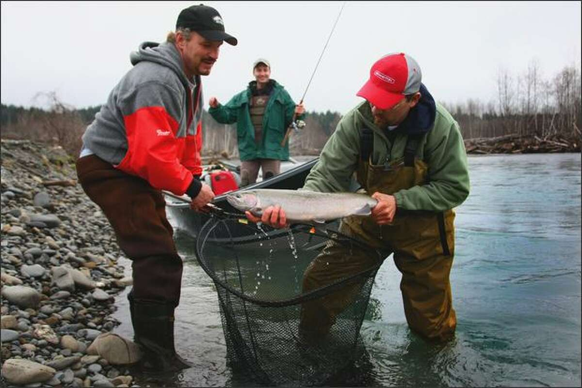 Tom Mathews, left, and fishing guide Mike Zavadlov net a steelhead caught by Mike Naiman, background, on the Hoh River.