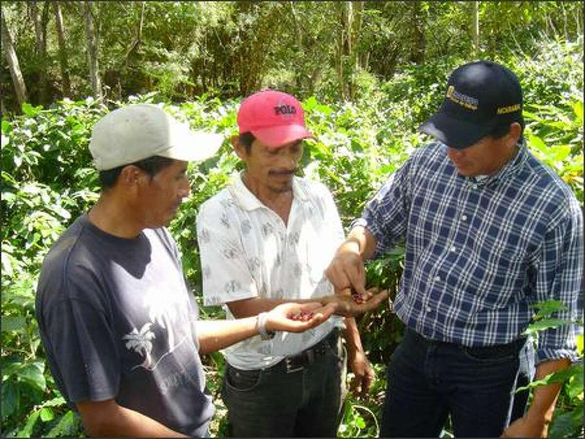 Farmers Leandro Hernandez, left, and Crescencio Sosa examine coffee beans with Mario Gaitan, director of Agros' Nicaragua programs.
