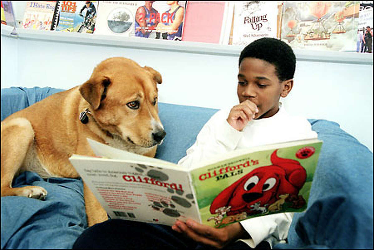Romael Jacobs reads Clifford's Pals to Buddy, a Labrador mix and a non-critical listener for reading students at Aki Kurose Middle School.
