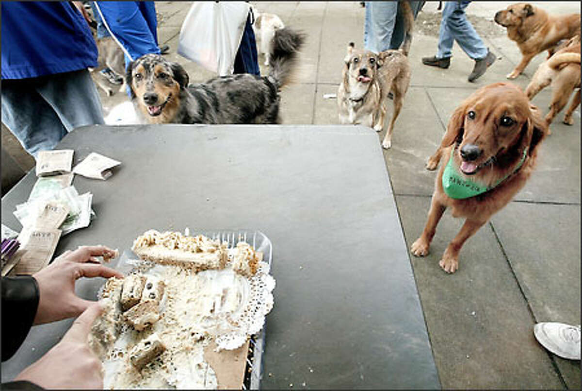 Dogs patiently wait for a piece a cake at the opening of a new off-leash area at Third Avenue and Bell Street in downtown Seattle yesterday. Cutting the cake is Randy Randolph, owner of Three Dog Bakery, a sponsor of the event.