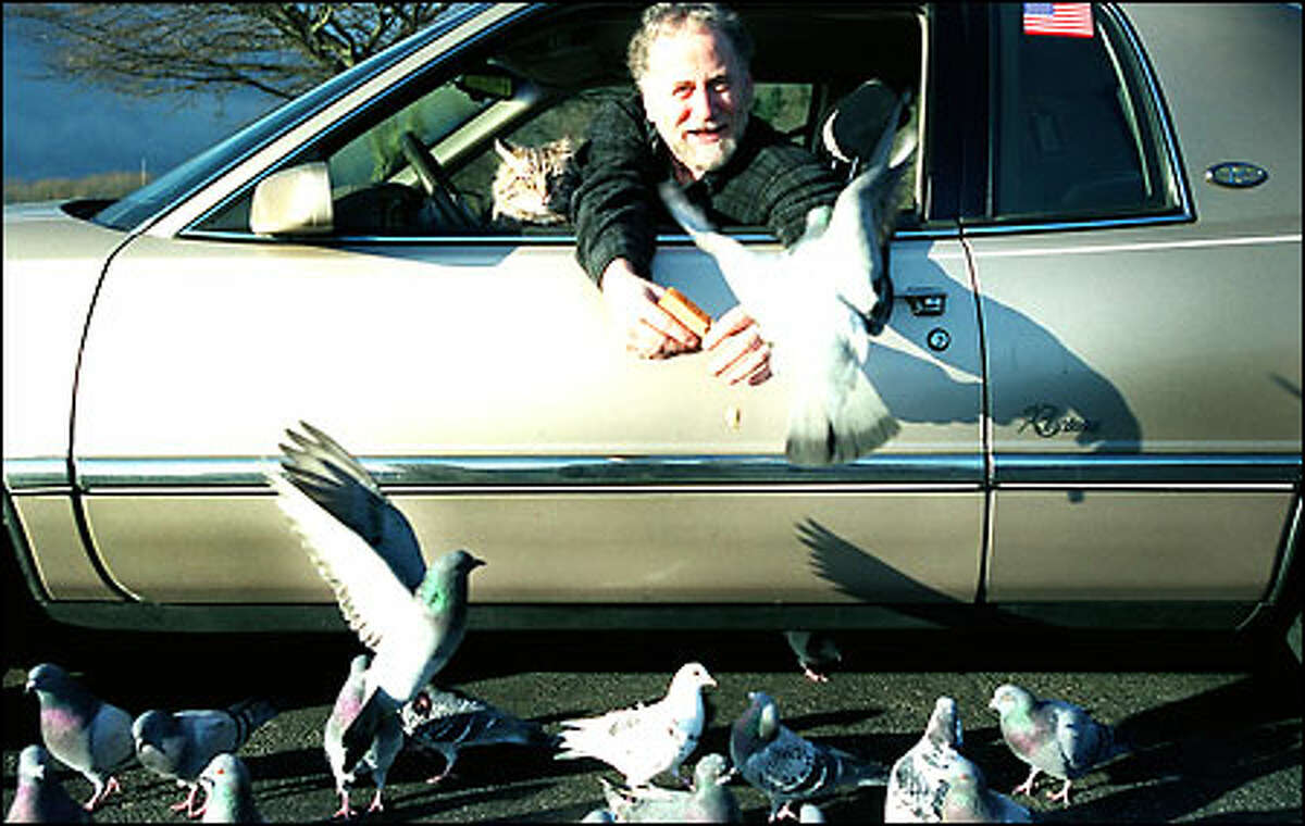 Donny Knox, staying in his car yesterday to avoid a cold wind at Golden Gardens Park, shares the spice of life - in this case, bread crumbs - with some pigeons. Knox's cat, Eddie, watches with a suspicious and less-than-enthusiastic look. Knox and Eddie come to the park about twice a week to feed birds.