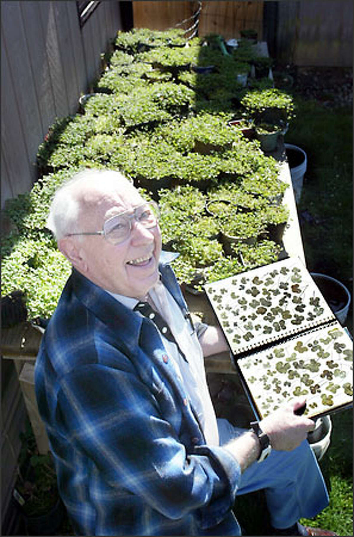 """Zumbuhl displays some of his favorite clovers, but he doesn't over-romanticize them: """"Clovers will grow anywhere. They're a weed."""""""