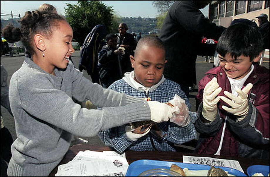 Emerson Elementary students Taylor Anderson, 8, left; DeAndre Tackett, 7; and Victor Contreas, 8, get to handle a yucky ratfish during a field trip to the University of Washington yesterday. Children from 10 Seattle elementary schools brought more than 1,000 chinook and coho fry they had raised to a pond before release under a program sponsored by Seattle Public Utitlities. Photo: Grant M. Haller, Seattle Post-Intelligencer / Seattle Post-Intelligencer