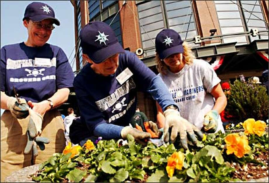 "Seattle Master Gardeners, from left, Sue Olson, Judy Duncan and Jeri Reiner ""warm up"" outside the home-plate entrance to Safeco Field for the services they are preparing to provide. King County Master Gardeners will be in charge of the plantings at the stadium this season. Photo: Jeff Larsen, Seattle Post-Intelligencer / Seattle Post-Intelligencer"