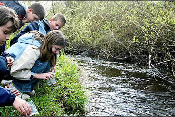 Pupils at Hollywood Hill Elementary School in Woodinville release coho salmon fry into Bear Creek. From left are Michael Mangione, 7; Kayla Schick, 12; Hunter Herrin, 8; and Trevor Herrin, 12.