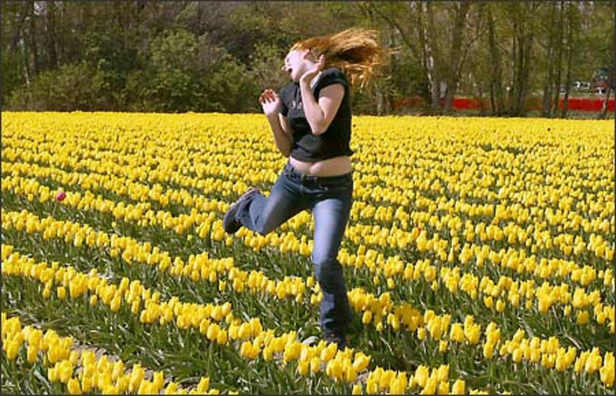 Cristin Bissonnette, 15, of South Seattle, jumps up for a picture that her boyfriend was taking in the tulip fields along Best Road near La Conner in Skagit County on Sunday, April 14. Cristin is on spring break this week. The Skagit Valley Tulip Festival, held annually since 1984, is in full bloom right now and continues through April 30.