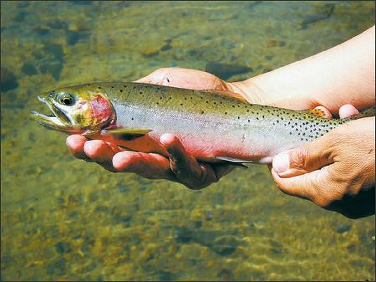 Hankering for cutthroat trout? The fishing is excellent and easily accessible from shore at Quiniscoe Lake, Pyramid Lake, Ladyslipper Lake and Lake of the Woods.