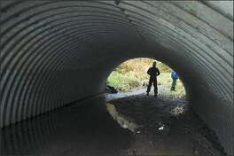 Leonard Young, the state Department of Natural Resources executive in charge of the Forests and Fish Plan, stands near a culvert that helps salmon reach part of a stream near Oakville in Grays Harbor County. The culvert was installed by Port Blakely Tree Farms at a cost of about $16,000.