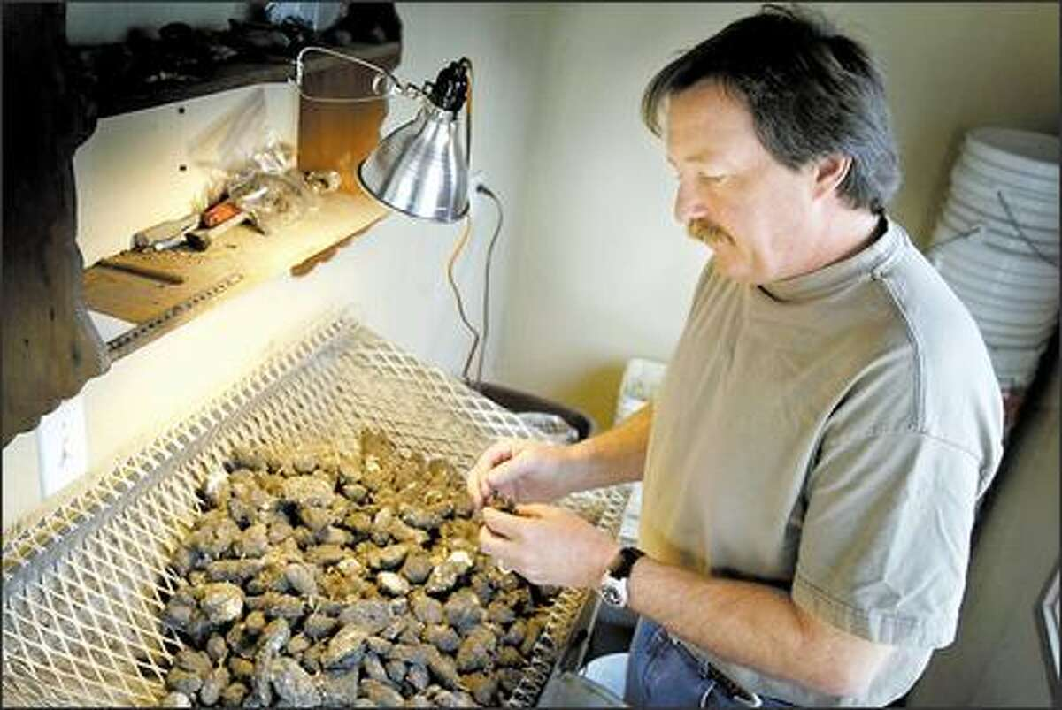 Bret Gaussoin of Pellets Inc. sorts raw owl pellets by size and quality, discarding the smaller, crumbly ones and sending the rest on to be sterilized and wrapped for sale.