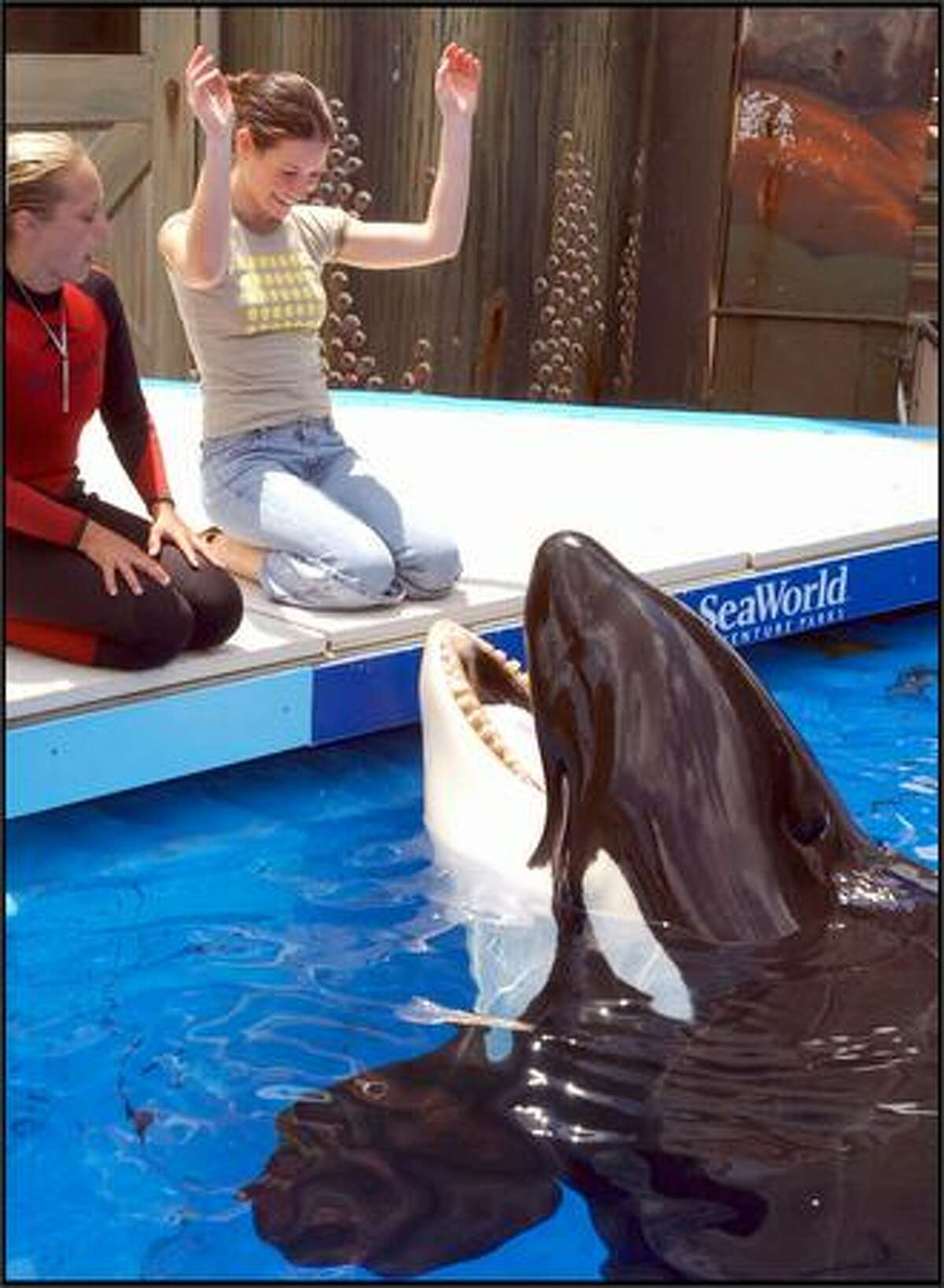 Looks like Shamu knows just where to find actress Evangeline Lilly, one of the stars of the hit ABC show,