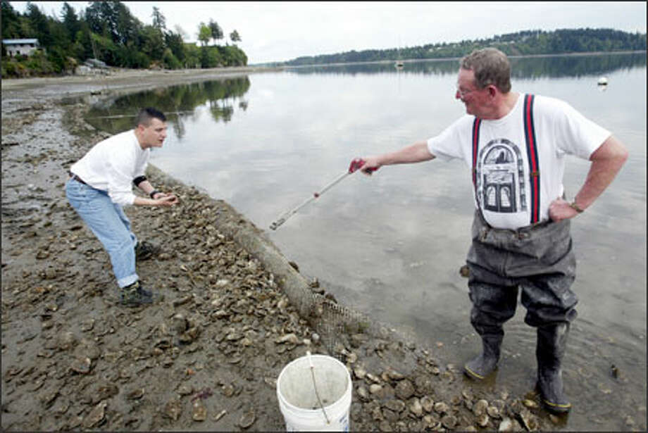 John Adams, left, and his father, Evan, look for oysters on their Shelton shellfish farm. John Adams is trying to rebuild the business after returning from Iraq. Photo: Scott Eklund, Seattle Post-Intelligencer / Seattle Post-Intelligencer