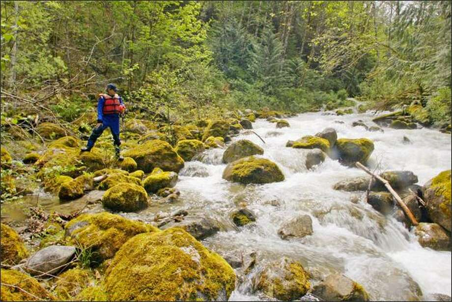 Rafting guide Jerry Michalec of North Cascades River Expeditions checks out snowmelt-engorged Alma Creek as it flows into the Skagit River near Darrington. Photo: Mike Kane, Seattle Post-Intelligencer / Seattle Post-Intelligencer