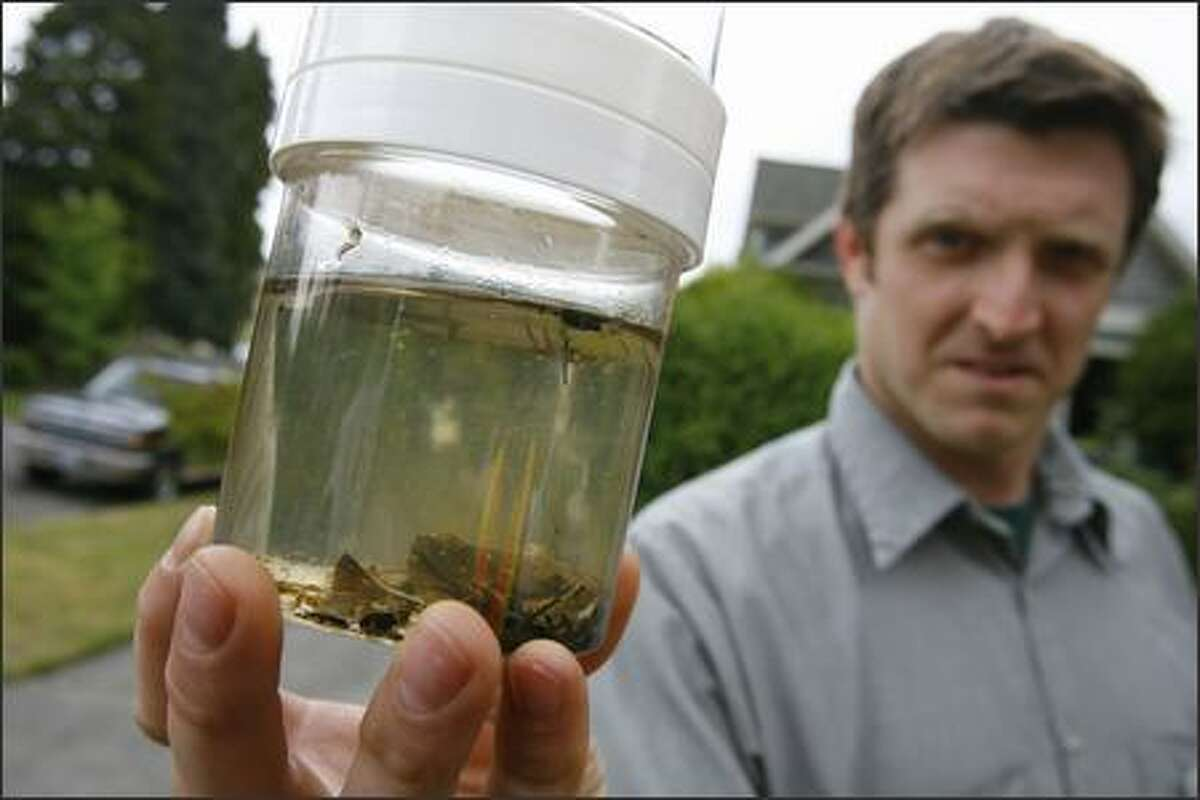 Mike Cluett with Eden Advanced Pest Technologies holds up a container of water and some mosquito larvae during a news conference at which Seattle Public Utilities announced its plan to fight the West Nile virus by targeting mosquito larvae in drainage basins.