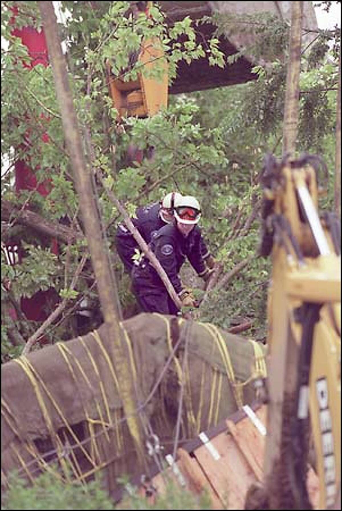 Seattle Fire Department personnel move along the trunk towards the rootball of the large elm that crushed the cab of the crane moving it during construction at Children's Hospital. The crane operator was killed.