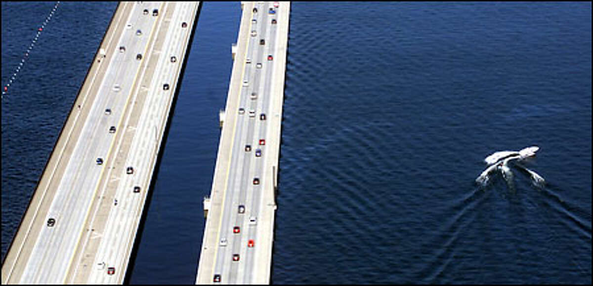 A lone water skier cuts the water of Lake Washington alongside the I-90 bridge, which sees a rare period of light traffic. A new proposal would expand the bridge's eight lanes.