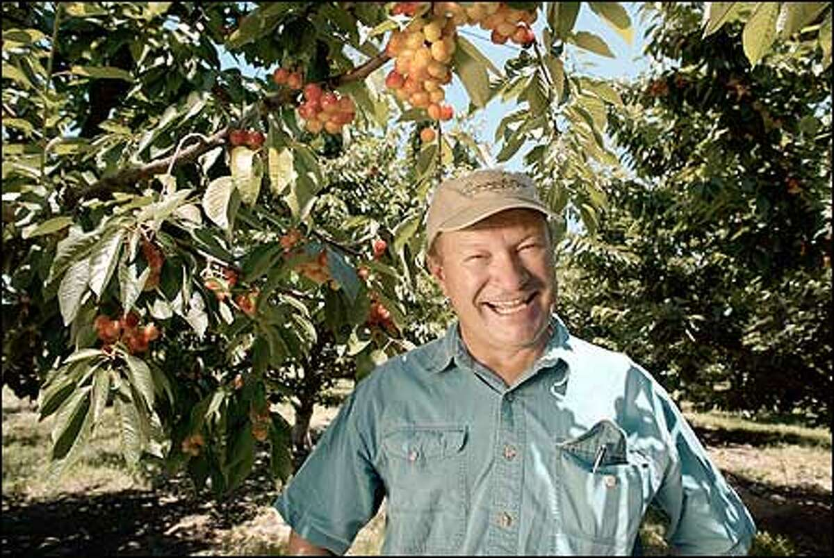 This is going to be the best-ever year for cherries, predicts Dick Boushey. The Grandview grower says the cherries will be big and extra sweet.