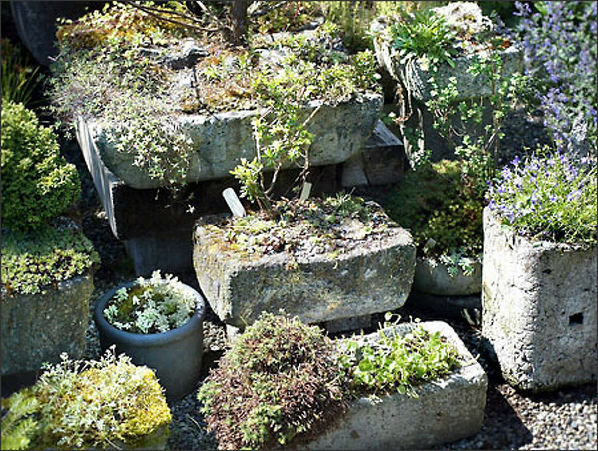 Barbara Flynn has made many of the hypertufa containers in which she grows small plants found in alpine meadows.