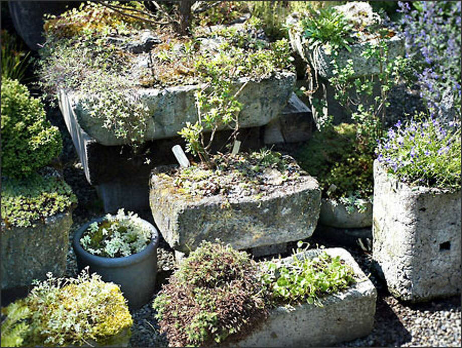 Barbara Flynn has made many of the hypertufa containers in which she grows small plants found in alpine meadows. Photo: Dan DeLong, Seattle Post-Intelligencer / Seattle Post-Intelligencer