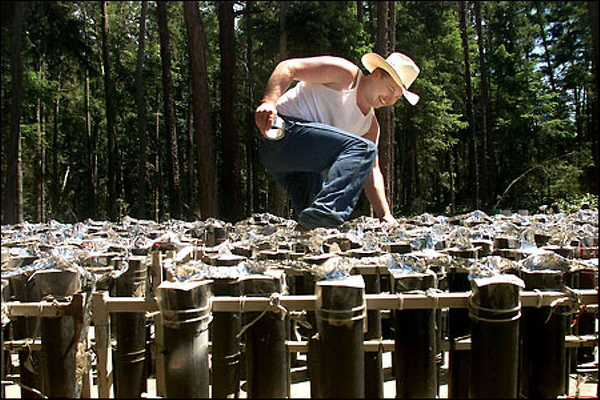 Jeff King looks for exposed fuses on one of the trailers holding mortars that will be used in the finale of Lopez Island's annual fireworks show. King and Dwight Walters, the creative force behind the show, will fire the action with a maze of switch boxes and wires.