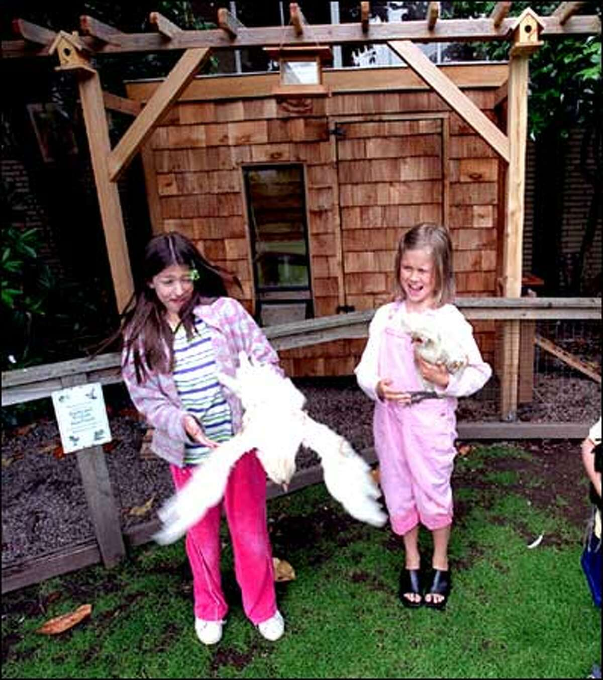 Catherine Blaine School in Magnolia is home to a chicken coop and nine chickens. Ciara Carucci, left, and Avery Carruthers try to get a handle on two of the residents of the stylish and sturdy coop behind them.
