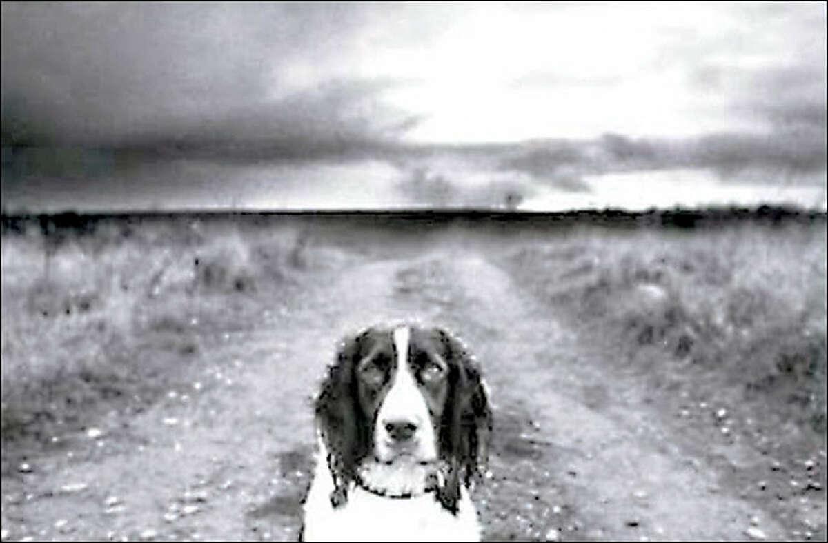 """""""Griffey"""", 1996"""
