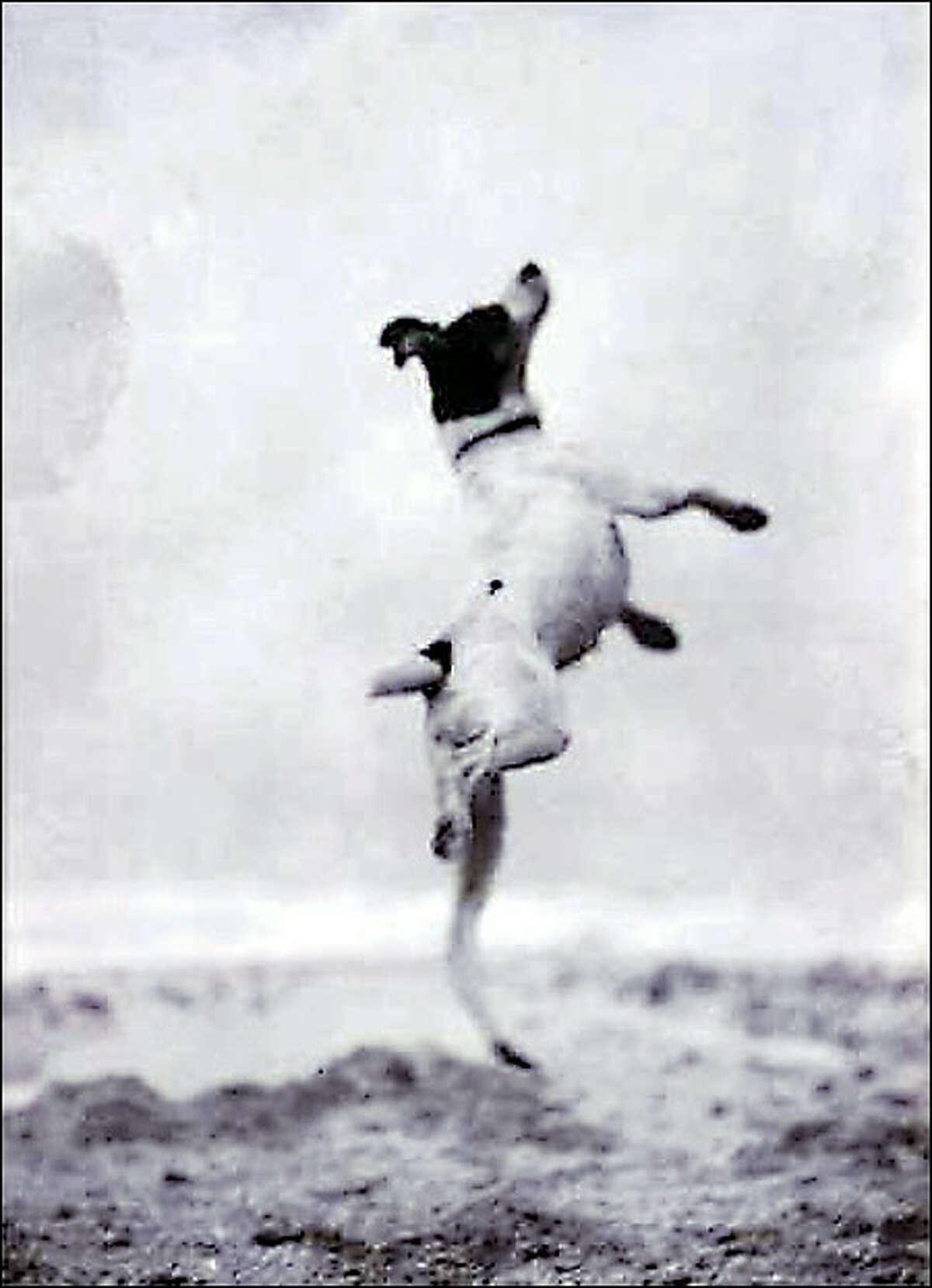 """""""Toby"""", 1923"""