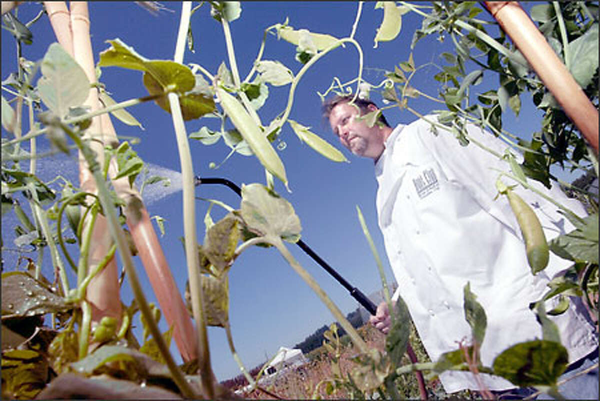 Brian Scheehser, executive chef at the Hotel Sorrento's Hunt Club, tends his pride and joy -- a vegetable garden in Woodinville.