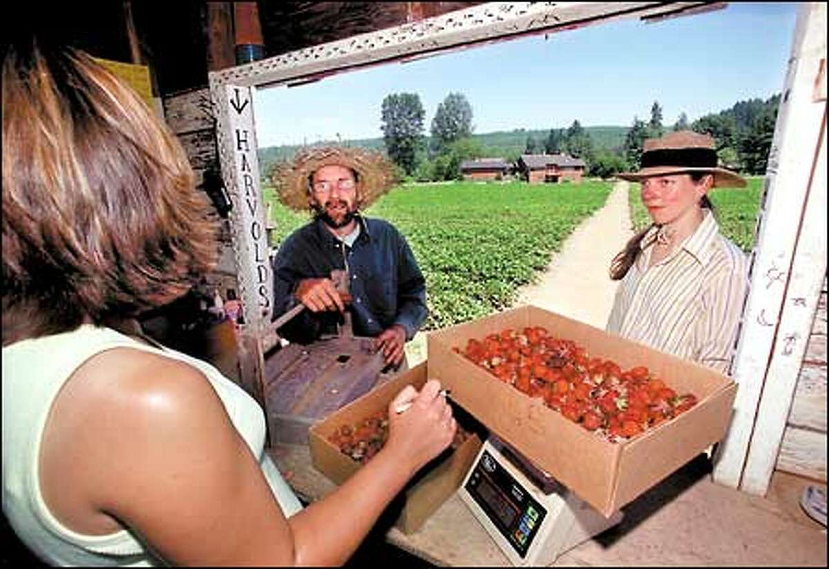 Wale and Christenson have their strawberries weighed at the Harvold u-pick farm in Carnation.