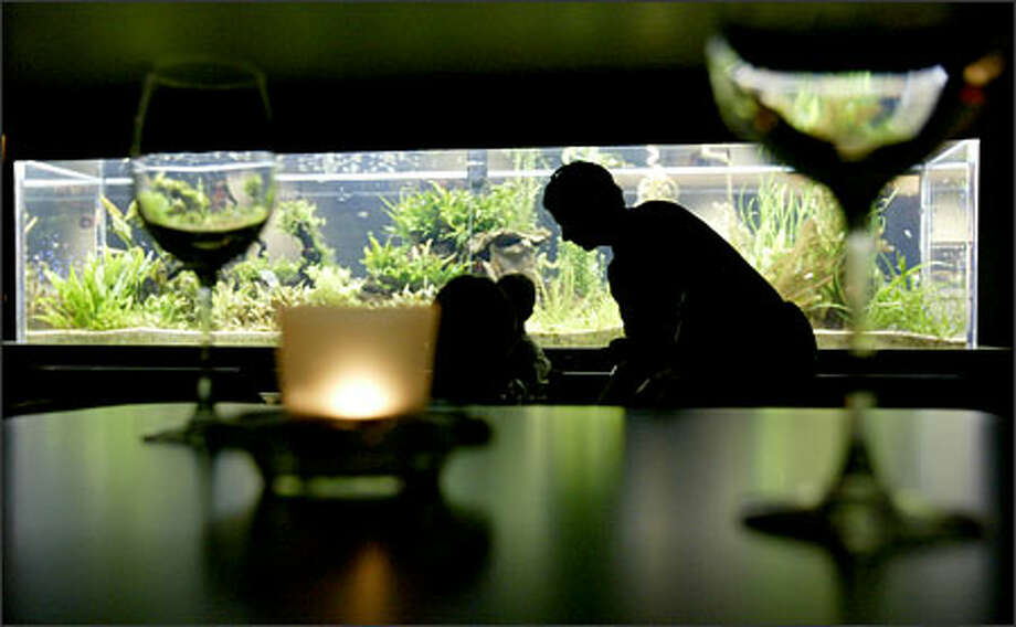A massive fish tank near the bar illuminates the lounge at The Triple Door, where the ambiance is great, but some treats don't measure up. Photo: Mike Urban, Seattle Post-Intelligencer / Seattle Post-Intelligencer