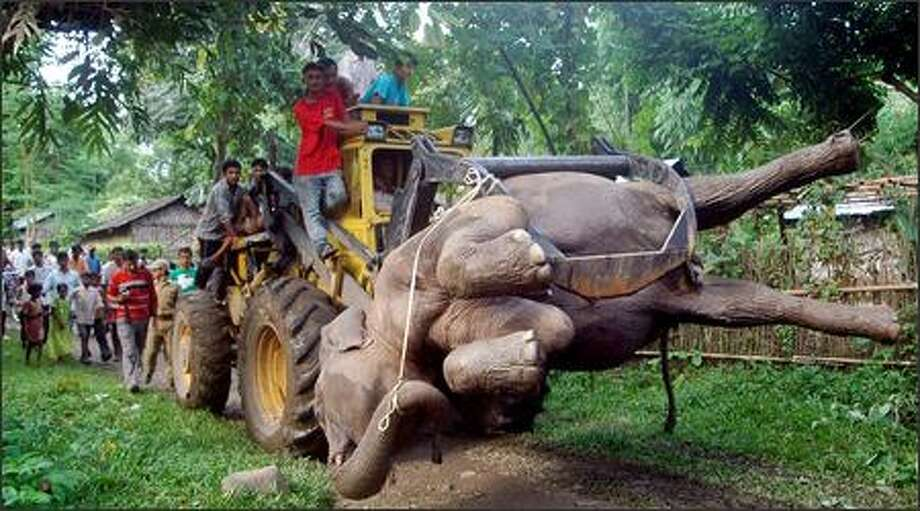 West Bengal state forest workers transport a dead elephant on a crane, as villagers look on at the Sylee tea garden in Jalpaiguri district, about 41 miles from Siliguri, in the eastern Indian state of West Bengal, Wednesday. Forest officials said the elephant was electrocuted by locals in a bid to save their crops from the wild animal. Photo: Associated Press / Associated Press
